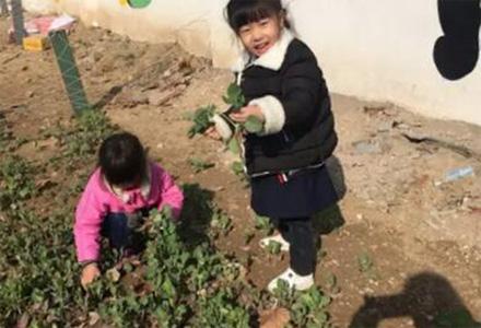开学季蔬菜采摘